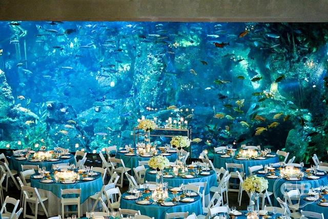 svadba-v-okeanariume-banketnyj-zal Какие есть свадебные аксессуары и как их правильно выбрать