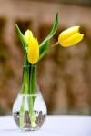 v7MDSQlSPic-100x150 Тюльпаны в декоре весенней свадьбы