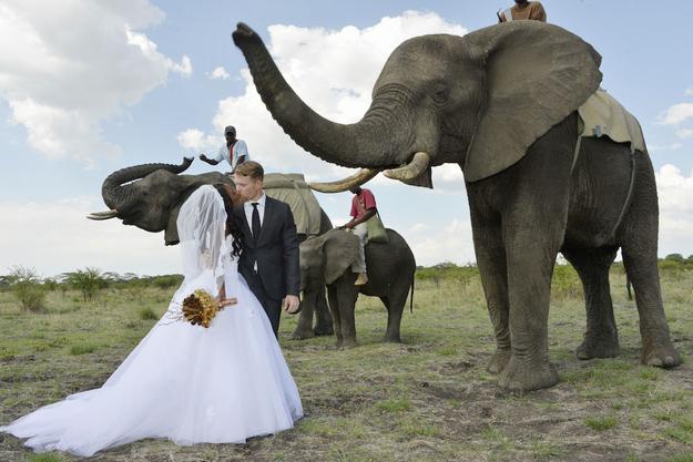 Zimbabve-1 18 фотографий после которых хочется чтобы Свадьба была в Зимбабве!