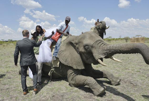 Zimbabve-2 18 фотографий после которых хочется чтобы Свадьба была в Зимбабве!