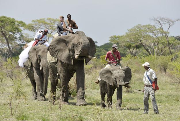 Zimbabve-3 18 фотографий после которых хочется чтобы Свадьба была в Зимбабве!